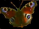 Voice Massage -terapia logo